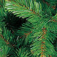 В Швеции нашли самое древнее в мире дерево