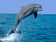 Двое британцев осуждены за приставание в пьяном виде к дельфину