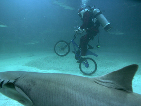 Самые странные находки в желудках акул