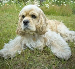 Назван самый агрессивный пес