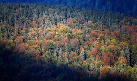 У Чернігівській області зловмисники нарубали дубового лісу на 200 тисяч гривень