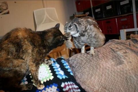 Парень подобрал раненую сову, и вот как она его отблагодарила (5 фото) (2)
