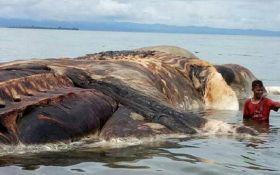На побережье Индонезии выбросило тушу огромного неизвестного существа: опубликованы фото и видео