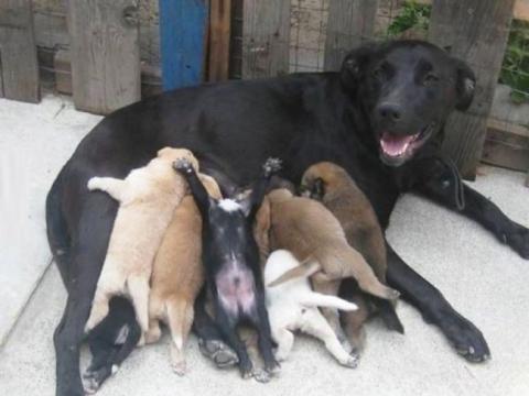 Собаки-мами, які безмірно пишаються своїм потомством (20 фото) (2)