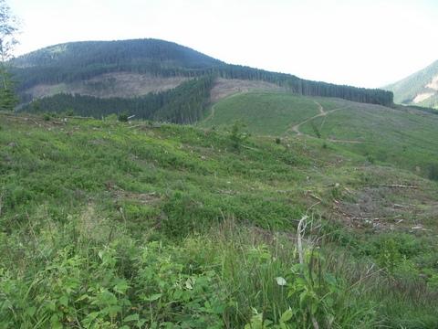 В Карпатах масштабная экологическая катастрофа: опубликованы фото (4)