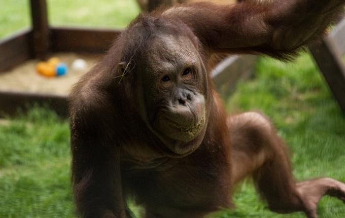 На грани вымирания: названы животные, которые могут исчезнуть с лица Земли (2)
