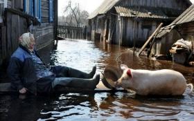 Не дай бог НАТО: в соцмережах посміялися над розрухою в Росії