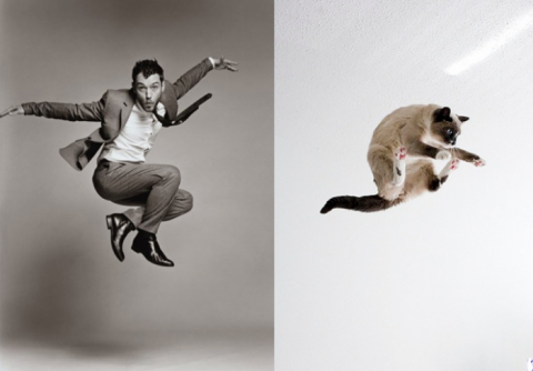 Коты как мужчины (21 фото) (3)