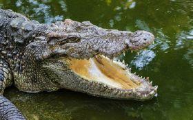 В Зимбабве крокодилы съели пастора, который пытался пройтись по воде