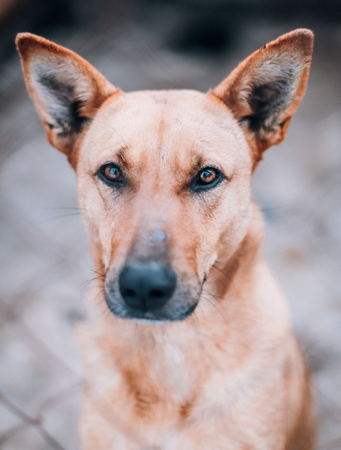 Найди друга: очаровательные собачки мечтают про уютный дом (1)