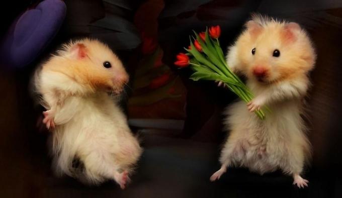 Оригинальные и красивые поздравления с 8 марта - стихи, картинки и проза (3)