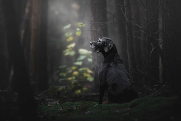 На престижному конкурсі обрали найкращі фото собак 2018 року: зворушливі кадри (1)