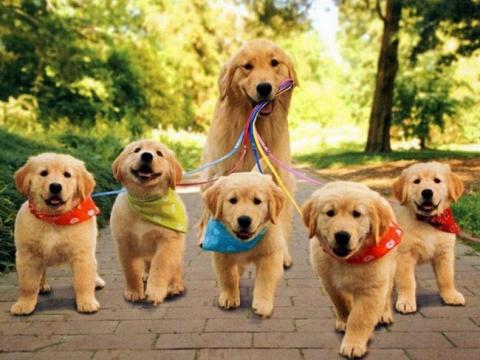 Собаки-мами, які безмірно пишаються своїм потомством (20 фото) (6)