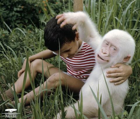 Животные-альбиносы, которым не нужен цвет, чтобы выглядеть потрясающе (16 фото) (10)