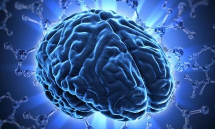 Вчені виявили в людському мозку метроном, який відміряє час