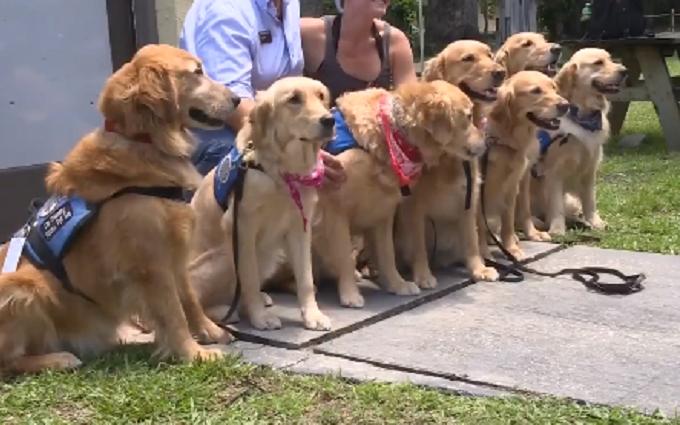 Постраждалих від стрілянини в США рятують за допомогою собак: з'явилося зворушливе відео