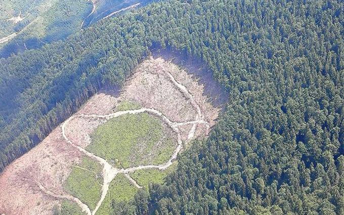 Луценко шокував картиною вирубки лісу в Карпатах: опубліковано вражаючі фото