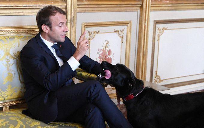 Пес президента Франції помочився накамін під час наради з міністрами