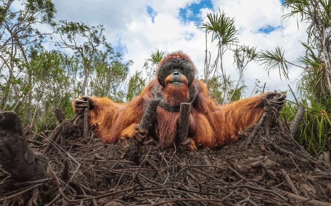 Эти снимки захватывают дух - на престижном конкурсе выбрали лучшие фото дикой природы 2020 года (13)