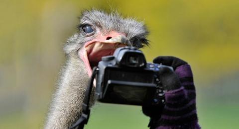 Тварини у фотографіях (20 фото) (13)