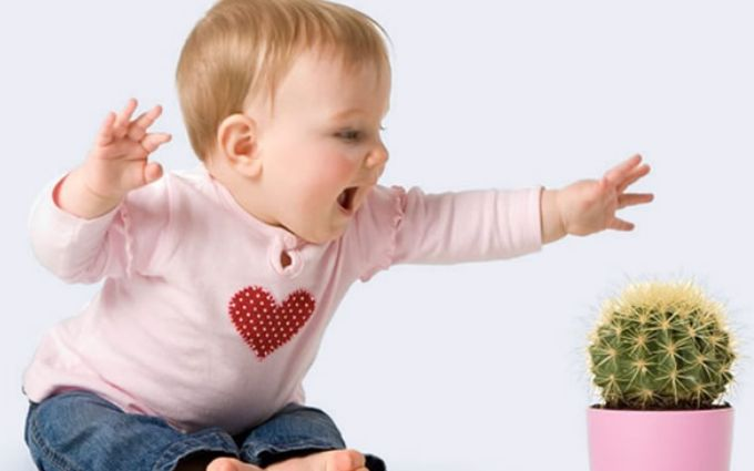 Комнатные растения, которые могут навредить ребенку