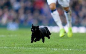Черный кот прервал матч английской Премьер-лиги и стал звездой сети: видео курьеза