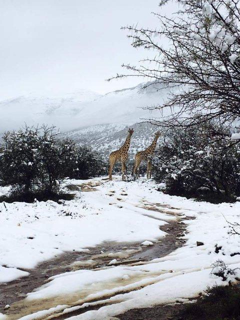 В Африке выпал снег - впечатляющие фото и видео (4)