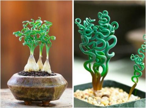 Розовый кактус и еще 12 самых необычных домашних растений (14 фото) (2)