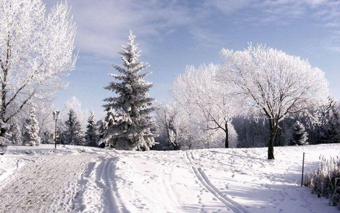 Главная елка страны уже едет в Киев: опубликованы фото