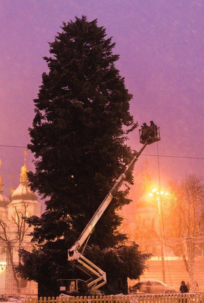Больше не лысая: в сети появились новые фото главной елки Украины (3)