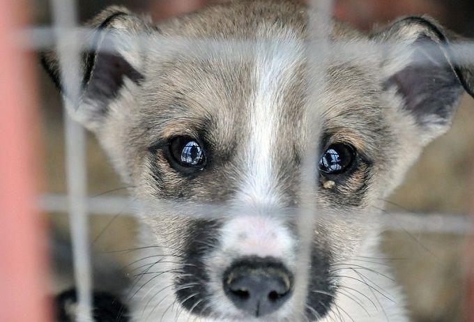Приюти: 5 приютов, где можно взять животное домой