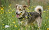 Знайди друга: чарівні собачки мріють про затишну домівку