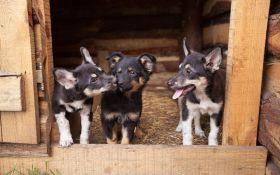 Как взять собаку из приюта и как сделать правильный выбор