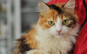 Знайди друга: пухнасті котики чекають на люблячих господарів