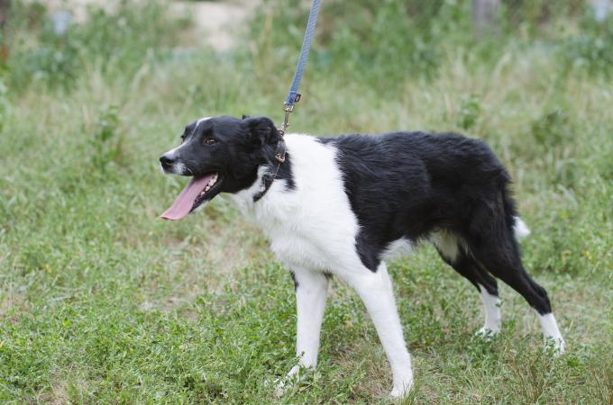 Найди друга: очаровательные собаки с нетерпением ждут своих новых хозяев (3)