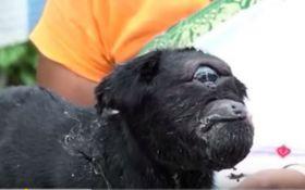 """В Индии родилась коза-""""циклоп"""" с одним глазом и ухом: опубликовано видео"""