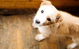 HELP'n'DANCE: у Києві відбудеться благодійний вечір на підтримку бездомних тварин