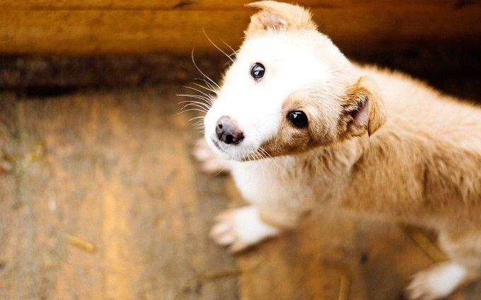 HELP'n'DANCE: в Киеве состоится благотворительный вечер в поддержку бездомных животных