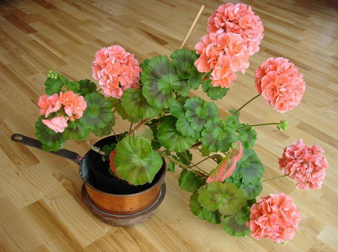 """7 легких способов """"поселить"""" приятные запахи в вашем доме (2)"""