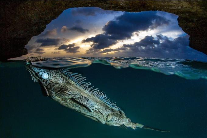 Эти снимки захватывают дух - на престижном конкурсе выбрали лучшие фото дикой природы 2020 года (8)