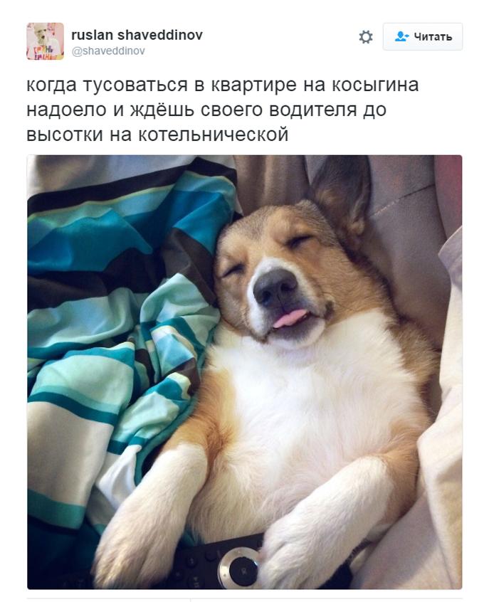 Соцмережі киплять через собачий скандал з дружиною міністра Путіна (3)