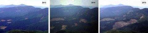 В Карпатах масштабная экологическая катастрофа: опубликованы фото (2)