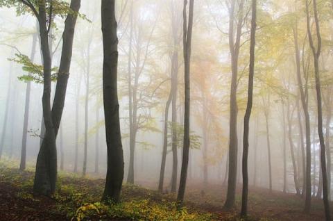 Погода на сьогодні: в Україні місцями дощі, температура від +7 до +17