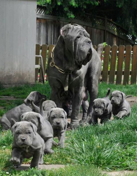 Собаки-мами, які безмірно пишаються своїм потомством (20 фото) (15)