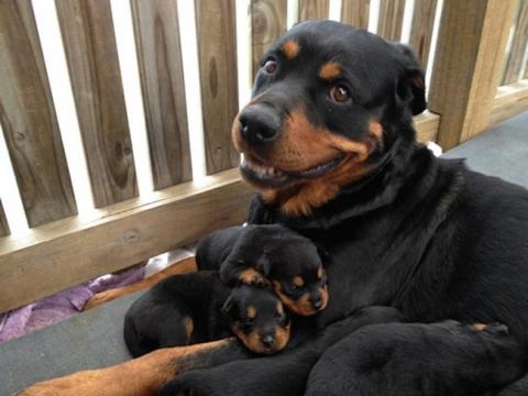 Собаки-мами, які безмірно пишаються своїм потомством (20 фото) (18)