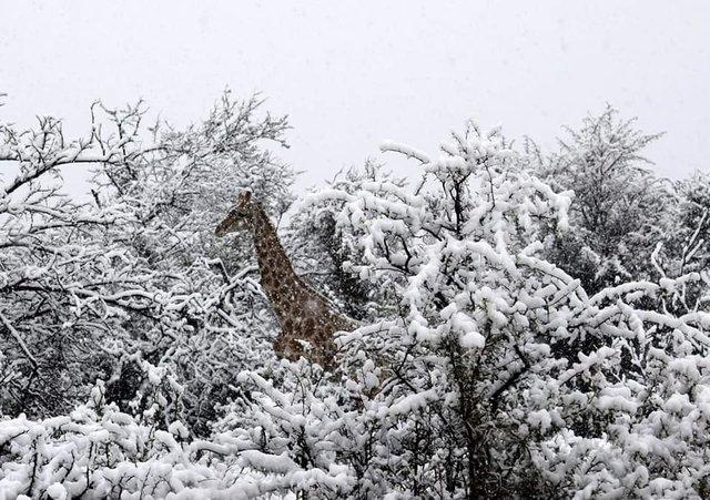 В Африке выпал снег - впечатляющие фото и видео (2)
