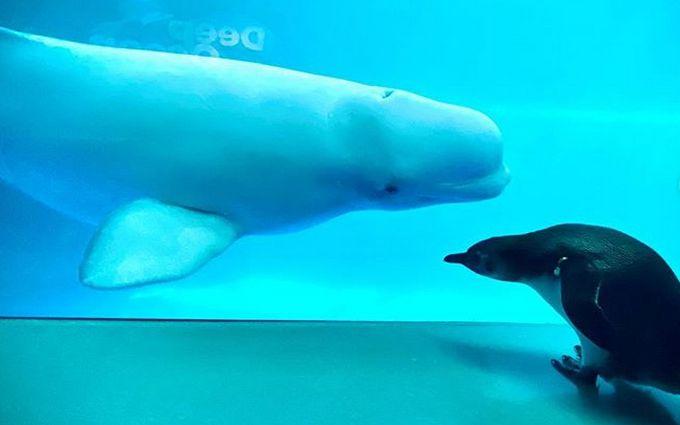 Невозможно не улыбнуться: развлечения пингвинов и морского льва в океанариуме развеселили сеть