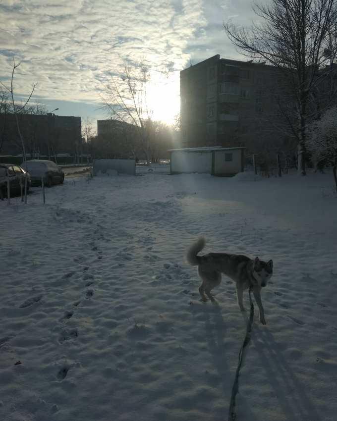 Киев засыпало снегом: в сети опубликованы яркие фото и видео (2)