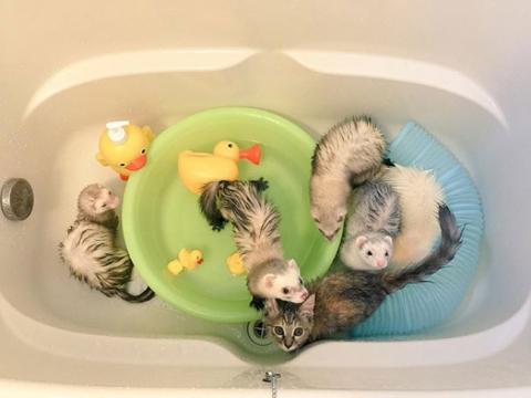 Представляємо кошеня, яке вважає себе тхором (12 фото) (9)