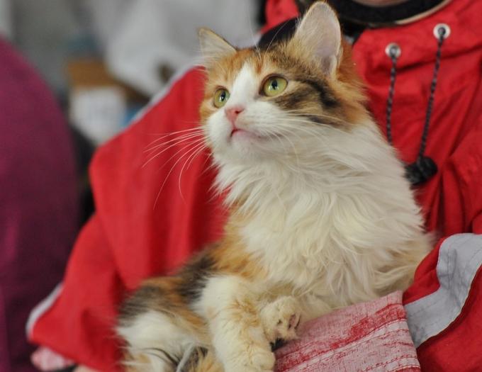 Найди друга: пушистые котики ждут любящих хозяев (6)